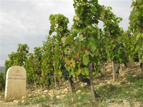 des-vignes-de-l-hermitage-naissent-des-vins-qui-se-vendent-.jpg