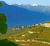 Les vins de vos vacances (3/4) : la Suisse, une petite terre de grands crus