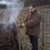 DOMAINE CHRISTOPHE, CHABLIS - Emmanuel Delmas, Sommelier & Consultant en vins, Paris