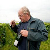 PORTRAITS DE VIGNERONS - Emmanuel Delmas, Sommelier & Consultant en vins, Paris