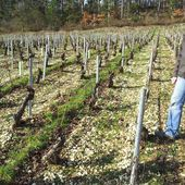 DOMAINE VRIGNAUD, CHABLIS - Emmanuel Delmas, Sommelier & Consultant en vins, Paris