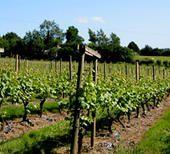 VINS ANGLAIS - Emmanuel Delmas, Sommelier & Consultant en vins, Paris
