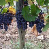 TOUT SAVOIR SUR LES TANINS - Emmanuel Delmas, Sommelier & Consultant en vins, Paris
