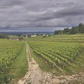 CA BOUGE A BORDEAUX ! - Emmanuel Delmas, Sommelier & Consultant en vins, Paris