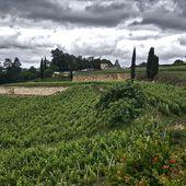 RETOUR DU VIGNOBLE BORDELAIS # 1 - Emmanuel Delmas, Sommelier & Consultant en vins, Paris