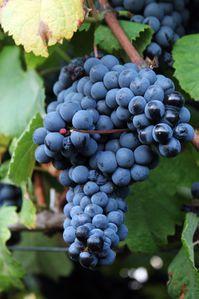 narbona-travel-uruguay-wine-food-5.jpg