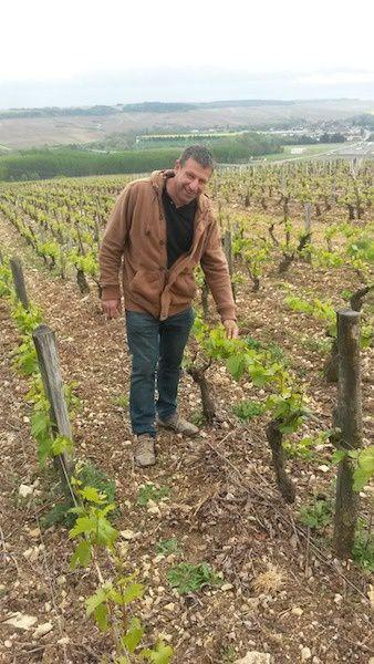 Denis Pommier, sur sa parcelle des Côtes de Lechet, à Chablis