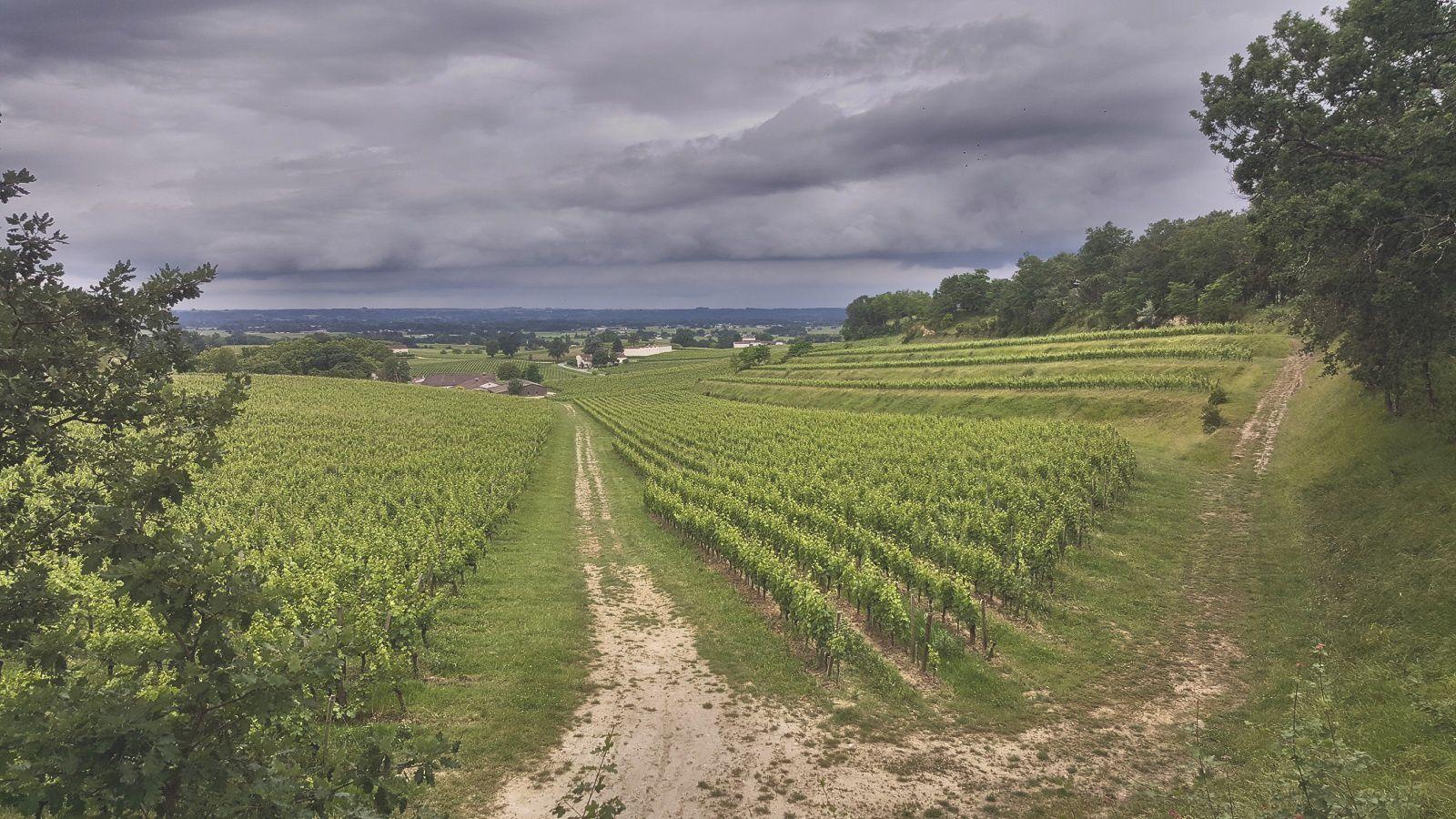 Vignes du château Mangot, Saint Émilion grand cru