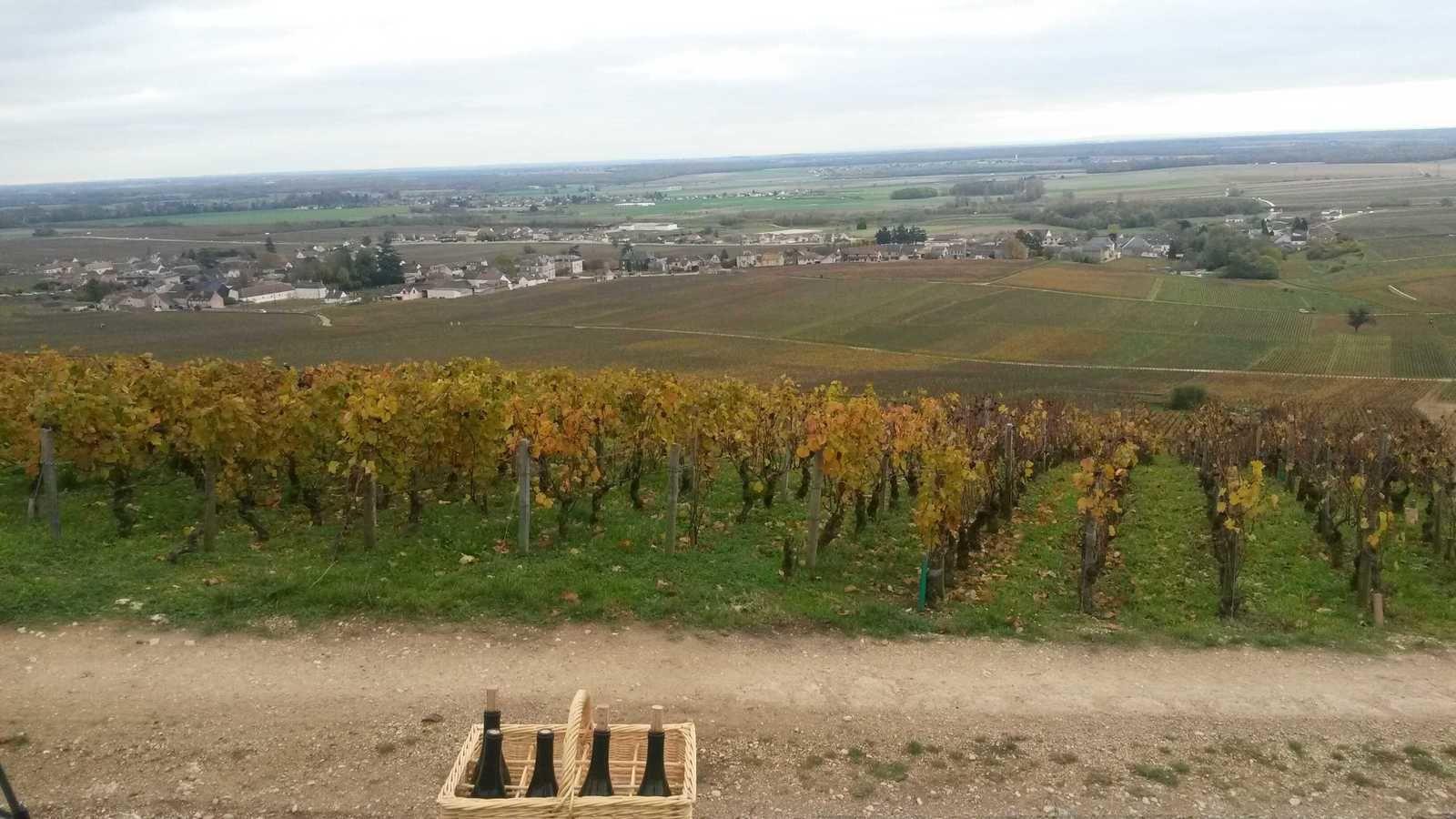 Dégustation dans les vignes de Gilles Ballorin, ici à Nuits Saint Georges.