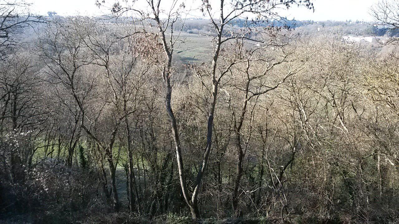 Le vignoble entoure la Sèvre Nantaise, fleuve local nourricier
