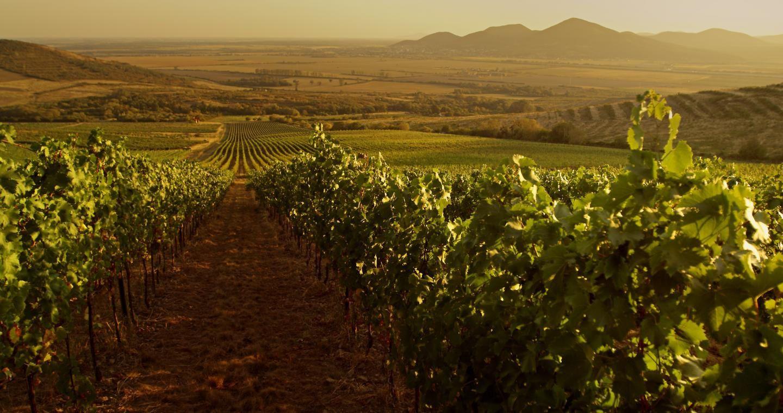 Vignoble de Tokaj. (Photo ©Carpathianroad.info)
