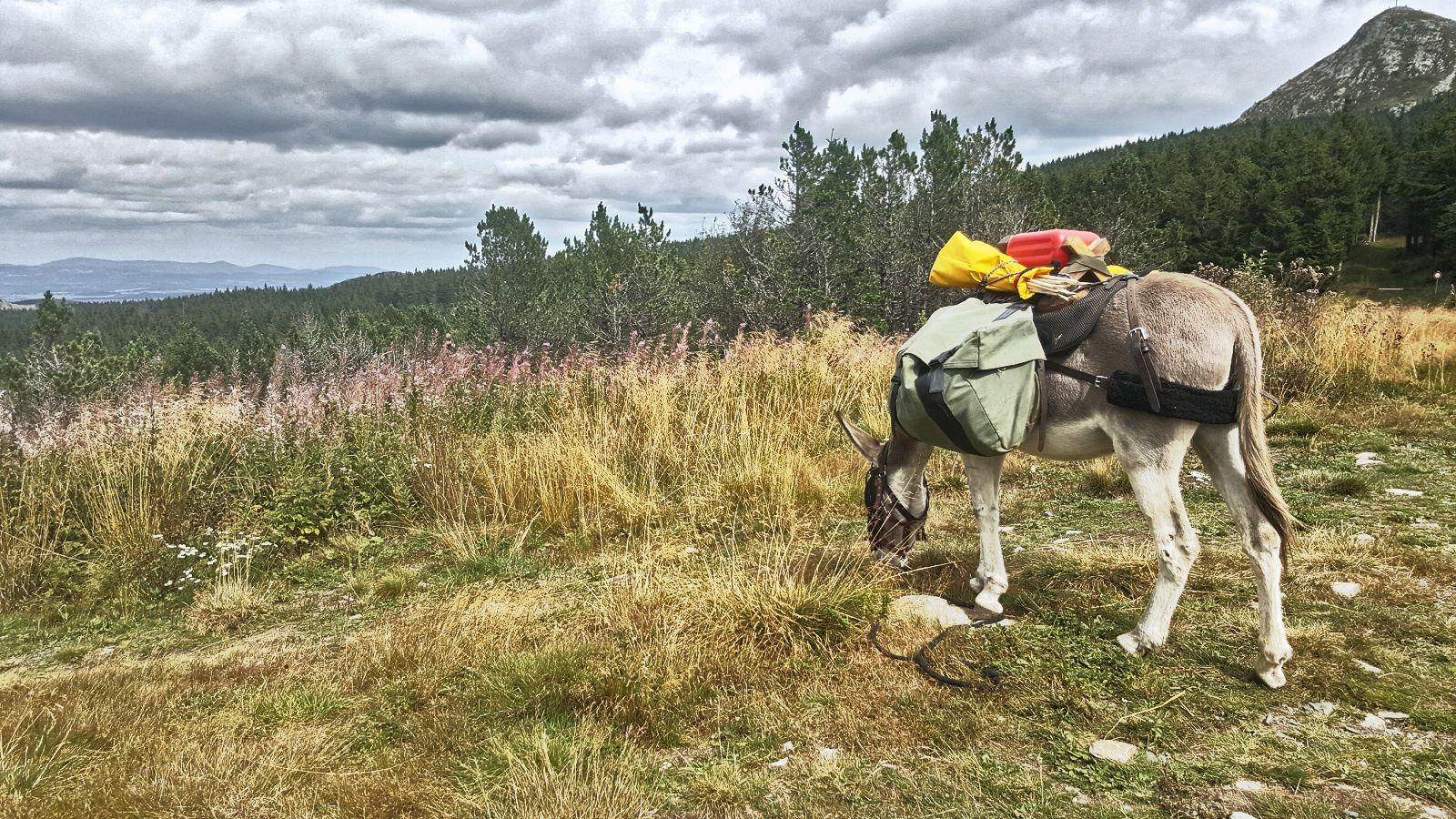 Avoine ânesse de 11 ans, ma compagne autour du mont Mezenc