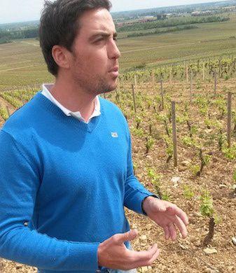 Thomas Bouley au coeur de ses vignes à Volnay