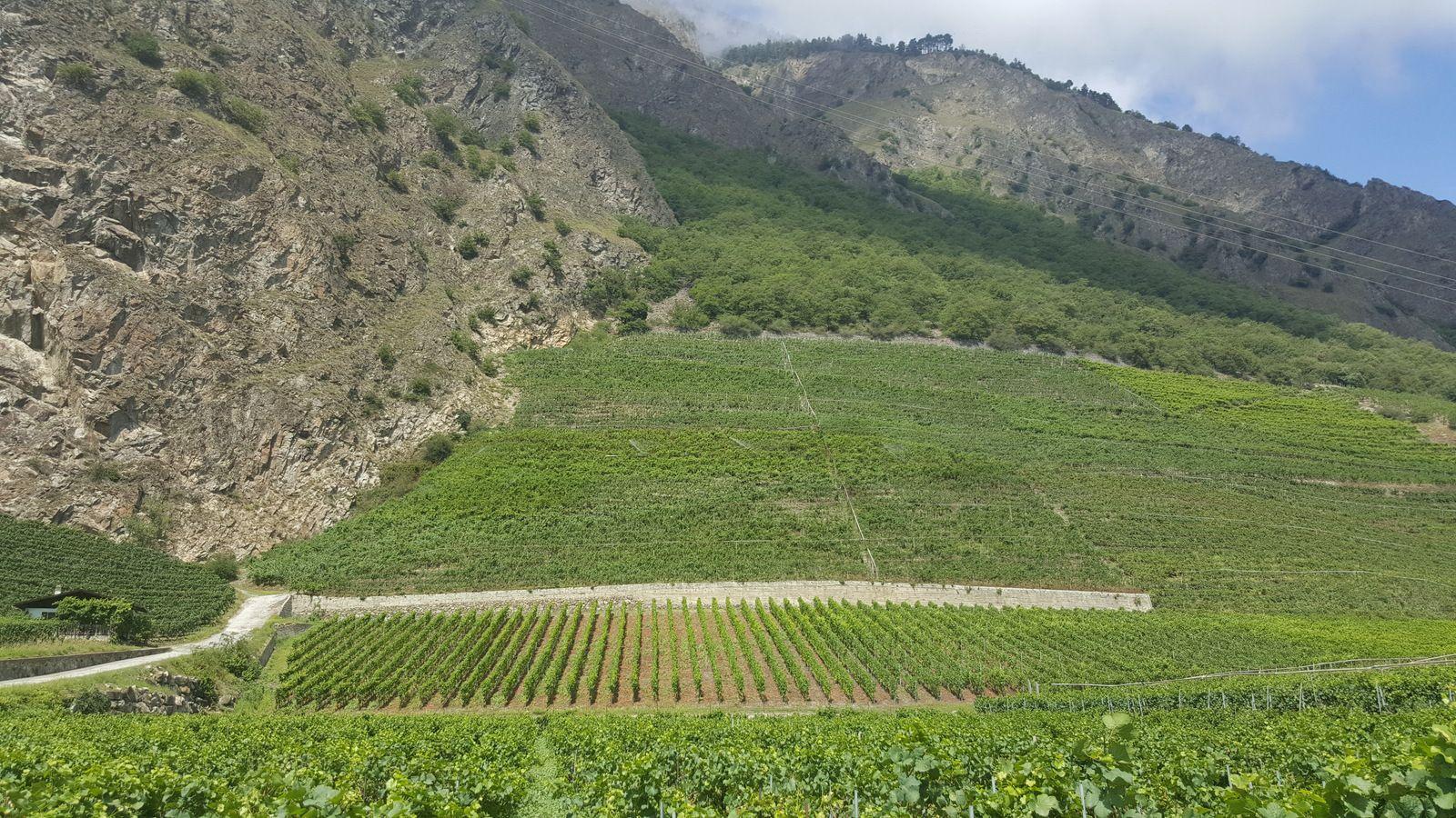 Le grand terroir de Fully, en Valais ©Emmanuel Delmas