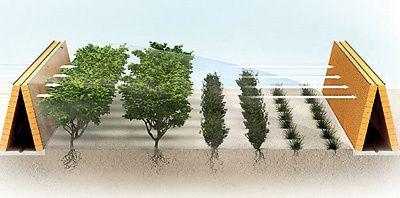 Il est possible de créer un vignoble au Qatar, avec de tels procédés techniques et surtout des idées.