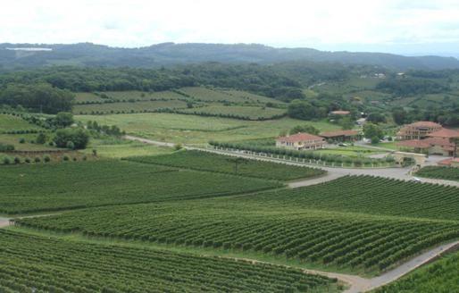 Le vignoble brésilien