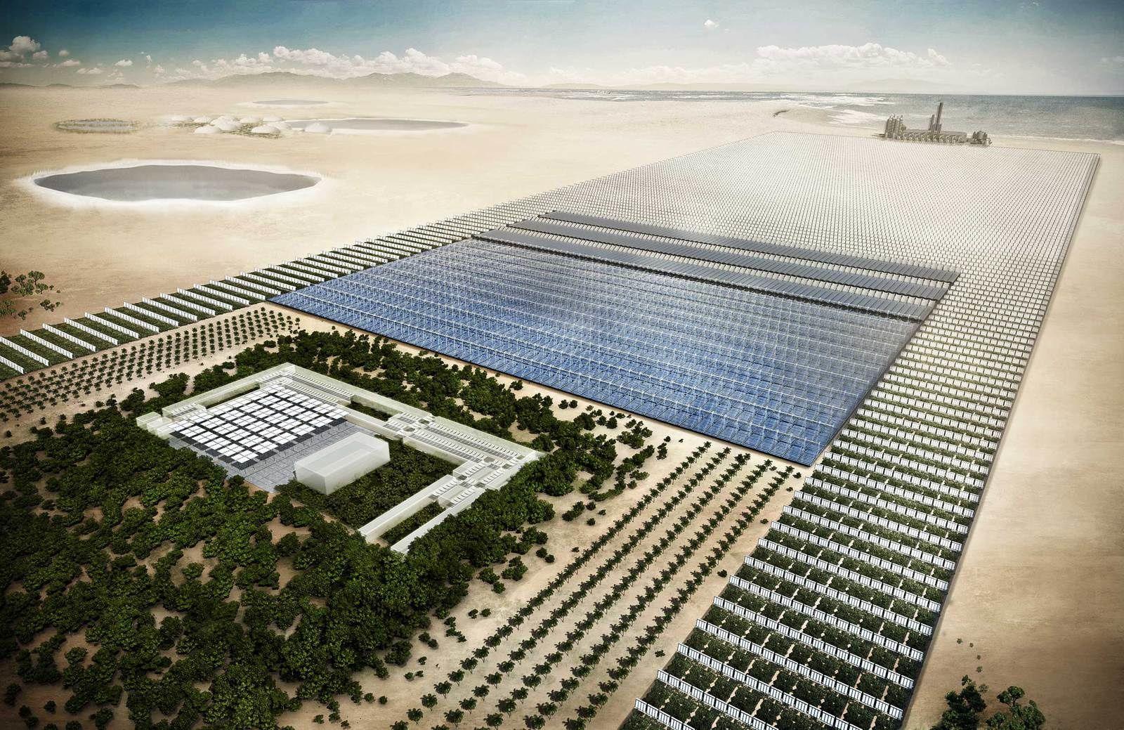 Le vignoble serait implanté non loin de la forêt artificielle en cours de développement, dans le désert du Qatar