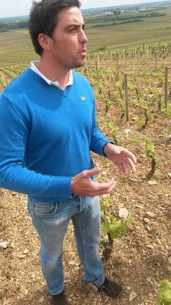 Thomas Bouley dans ses vignes, un moment magique
